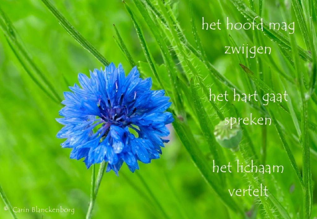 Kinesiologiepraktijk-Senang-Den Dolder-bronfoto www.Centaurea.nl